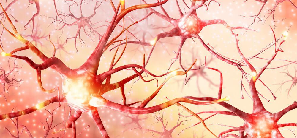 Протекция нейронов