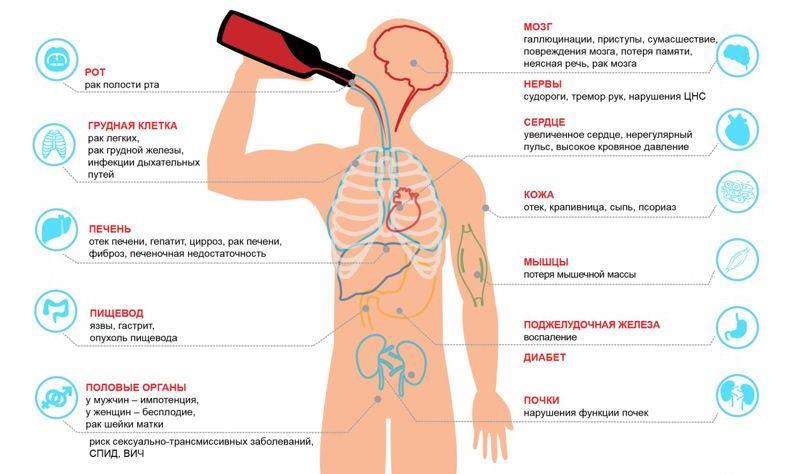 Механизм воздействия спирта на организм