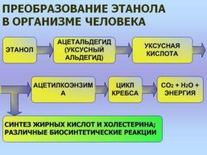 Метаболизм этилового спирта в организме