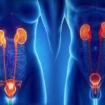 Хронические патологии мочеполовой системы